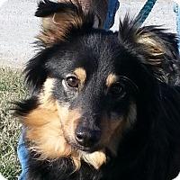Adopt A Pet :: Straylie - Brattleboro, VT