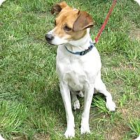 Adopt A Pet :: Snickers - West Warwick, RI