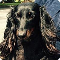 Adopt A Pet :: Hugs - Orlando, FL