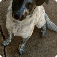 Adopt A Pet :: Cash - Glastonbury, CT