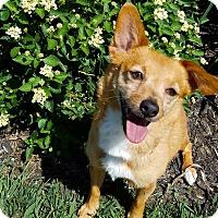 Adopt A Pet :: Shayla - Louisville, Ky - Dayton, OH