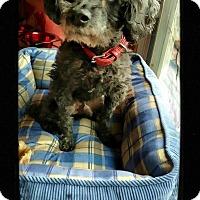 Adopt A Pet :: Pierre - Fallston, MD