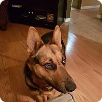 German Shepherd Dog Mix Dog for adoption in Winnipeg, Manitoba - SADEE