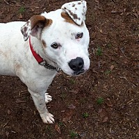 Adopt A Pet :: Hope - Simpsonville, SC