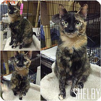 Adopt A Pet :: Shelby  - Blasdell, NY