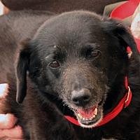 Adopt A Pet :: Blackfoot - Palmdale, CA
