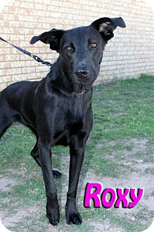 Labrador Retriever Mix Dog for adoption in Midland, Texas - Roxy