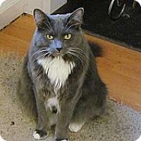 Adopt A Pet :: *Fritz - Winder, GA