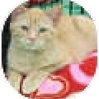 Adopt A Pet :: Ferdinand - Harrisburg, NC