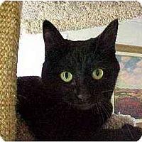 Adopt A Pet :: Kona (outgoing!) - Portland, OR