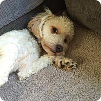 Adopt A Pet :: Fargo - Sherman Oaks, CA
