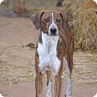 Adopt A Pet :: Katie - Marietta, GA