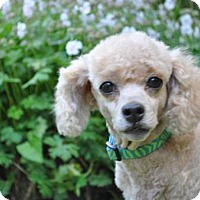 Adopt A Pet :: CASEY - Elk River, MN