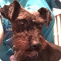 Adopt A Pet :: Leah - Laurel, MD