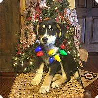 Adopt A Pet :: Mr. Jingles - Russellville, KY