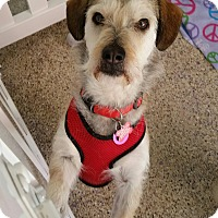 Adopt A Pet :: Meco - Thousand Oaks, CA