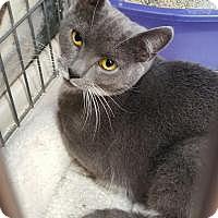 Adopt A Pet :: Hillary - Raritan, NJ