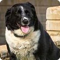 Adopt A Pet :: LILLIE - Sherman, CT