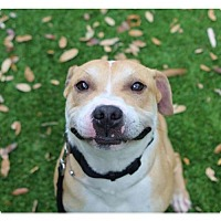 Adopt A Pet :: Beethoven (courtesy listing) - West Palm Beach, FL