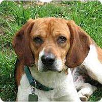 Adopt A Pet :: Josh - Blairstown, NJ