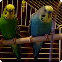 Adopt A Pet :: CLYDE AND DALE - Mantua, OH