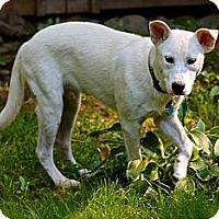 Adopt A Pet :: Jack - Hastings, NY