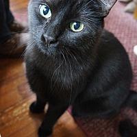 Adopt A Pet :: Olive - North Haledon, NJ