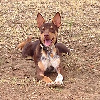 Adopt A Pet :: Bonnie - GRANBURY, TX