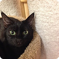 Adopt A Pet :: Macy, Natalie, Onyx - Foothill Ranch, CA
