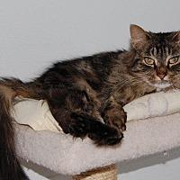 Adopt A Pet :: Beauty - Brainardsville, NY