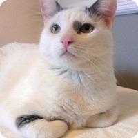 Adopt A Pet :: Snuggler - New York, NY