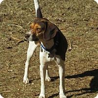 Adopt A Pet :: REESE - Brookside, NJ