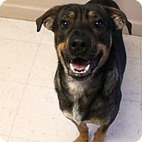 Adopt A Pet :: Joseph - Trenton, NJ