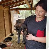 Adopt A Pet :: Bridget - Olympia, WA