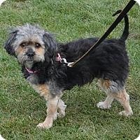 Adopt A Pet :: Sassy - Akron, OH