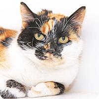 Adopt A Pet :: Coffee - Encinitas, CA