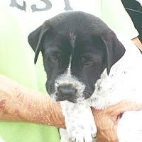 Adopt A Pet :: Zeus - Mexia, TX