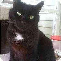 Adopt A Pet :: Sparky - Portland, OR