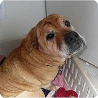 Adopt A Pet :: Andy - Newport, VT