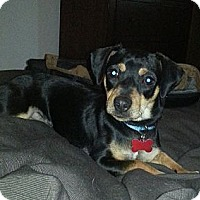 Adopt A Pet :: James - Oak Creek, WI
