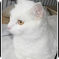 Adopt A Pet :: Mr. Kitty ? - Cincinnati, OH