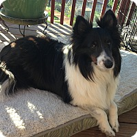 Adopt A Pet :: Zheke - San Diego, CA