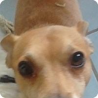 Adopt A Pet :: Sprocket the Rocket - Woodland, CA
