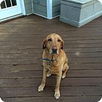 Adopt A Pet :: Murphy - Cumming, GA