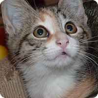 Adopt A Pet :: Eva - Stafford, VA