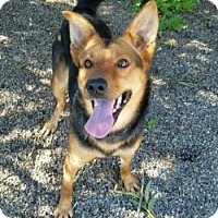 Adopt A Pet :: ROXIE - Gustine, CA