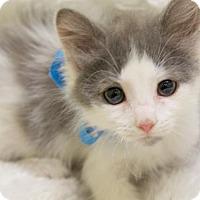 Adopt A Pet :: Justice - Millersville, MD