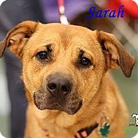 Adopt A Pet :: Sarah - Alpharetta, GA