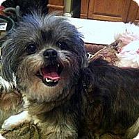 Adopt A Pet :: Pippa - Baton Rouge, LA
