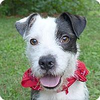 Adopt A Pet :: Winchester - Mocksville, NC